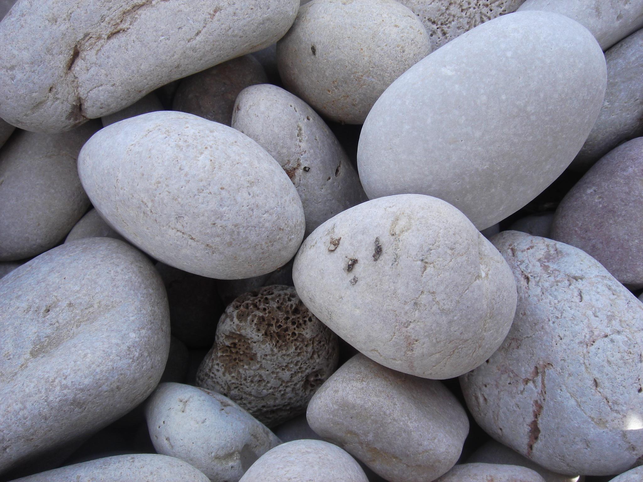 Decoraci n de jardines con piedras y plantas florister a for Piedras blancas de decoracion