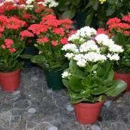 Las mejores flores para plantar en macetas