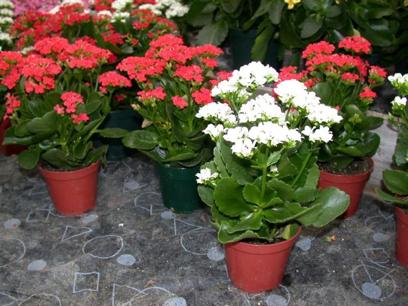 Las mejores flores para plantar en macetas Floristera MiMendez en
