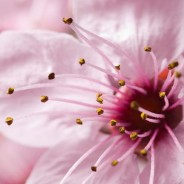 Fotografías de flores en primavera