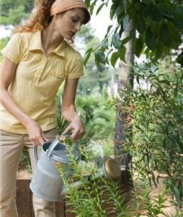 Cómo cuidar las plantas durante las vacaciones de verano