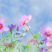 La fragancia de las flores depende de las bacterias